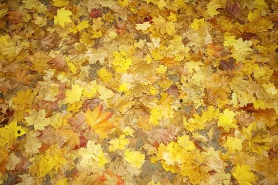 1000 Blätter auf dem Waldboden
