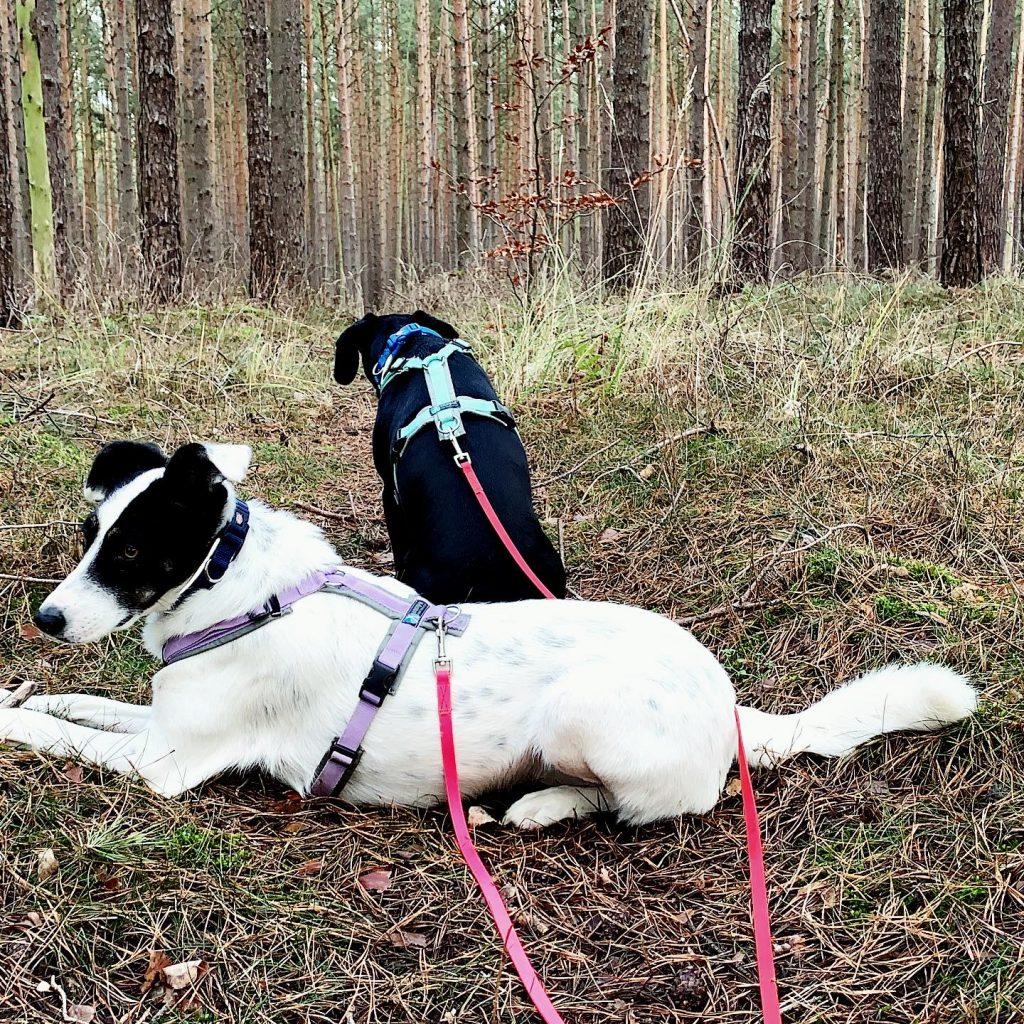 Urlaub mit Hund an der Seenplatte
