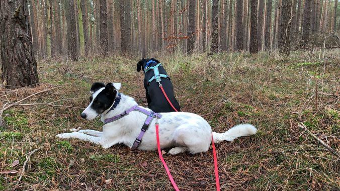 Ferienhausurlaub mit Hund